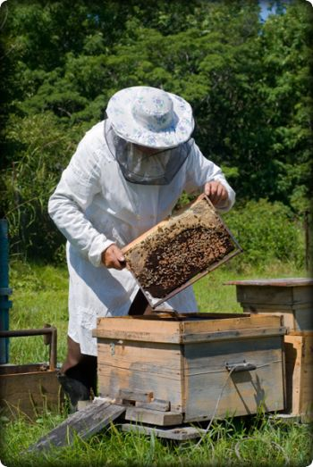 Objawy rojenia się pszczół post thumbnail image